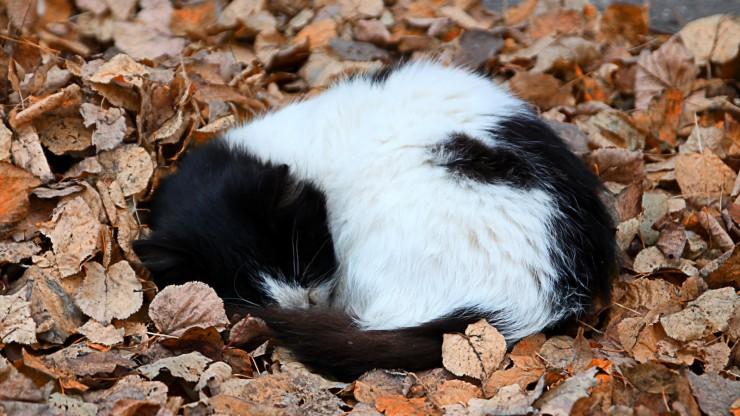 Черно-белый котенок свернулся клубком