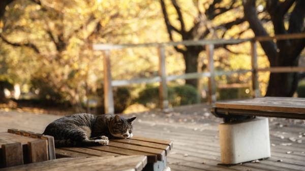 Кот спит на скамье