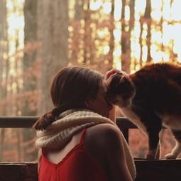 Красивое фото девушек с котами