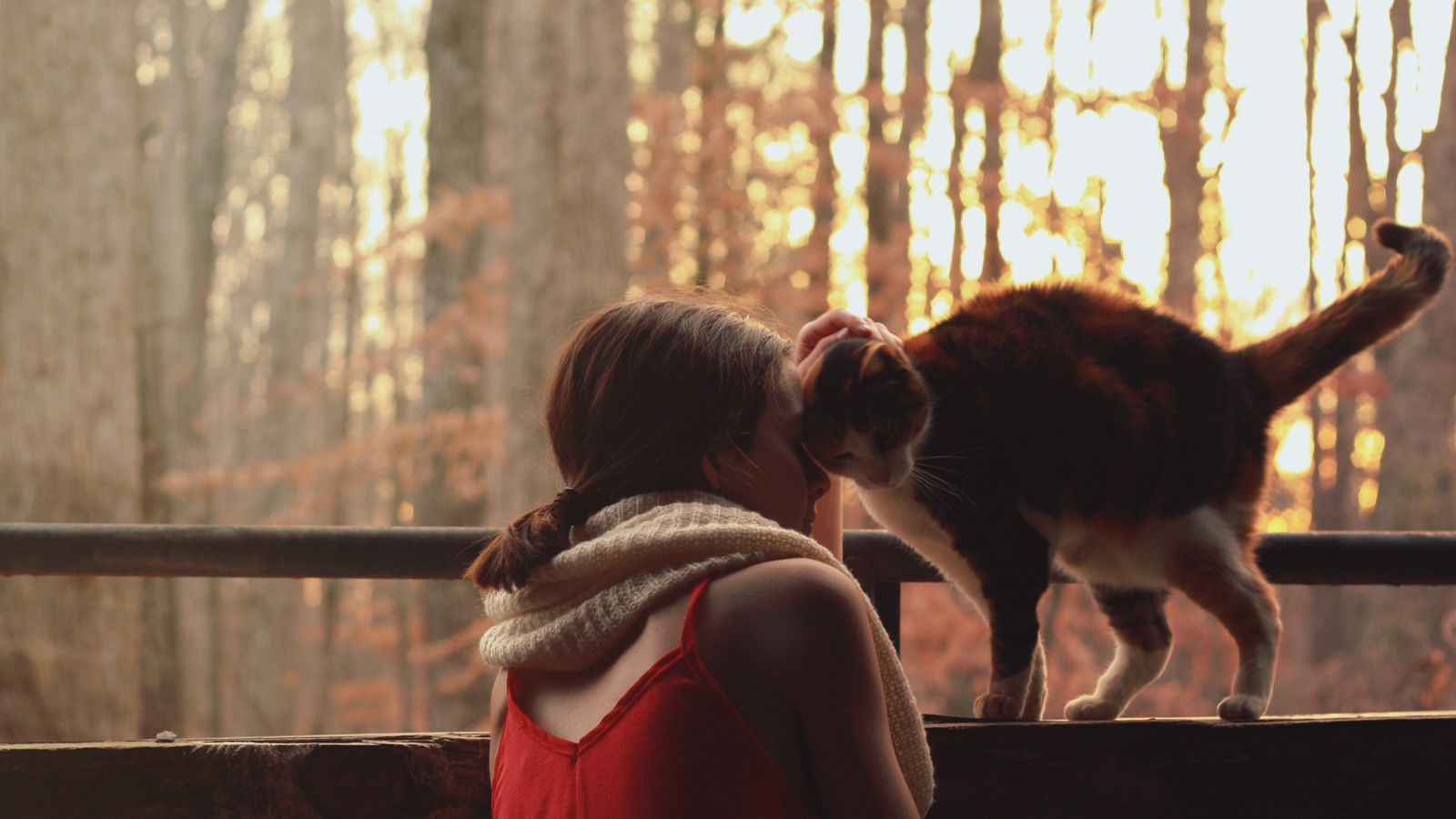 Девушка гладит трехцветную кошку