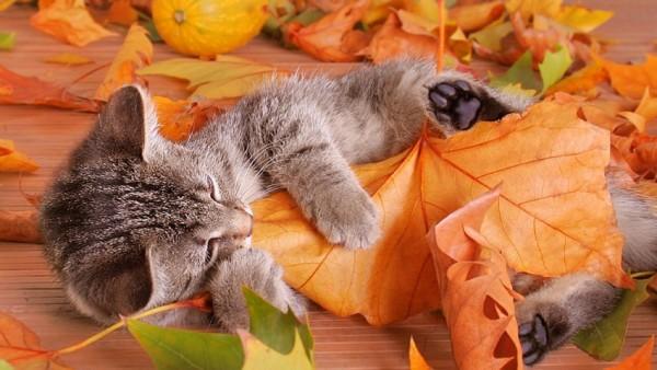 Кот в листве