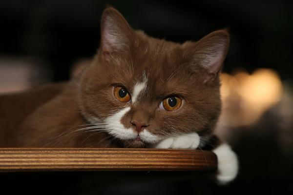 Интересная история про котенка