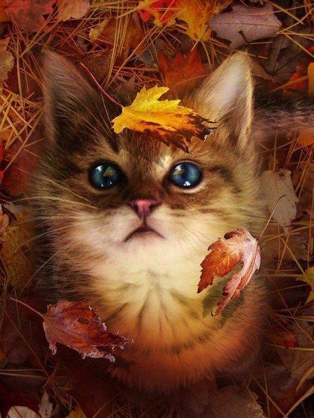 Яркая осень и котенок в листве