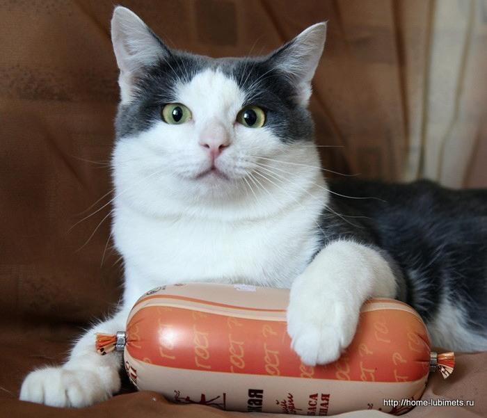 Смешная история про котов читать