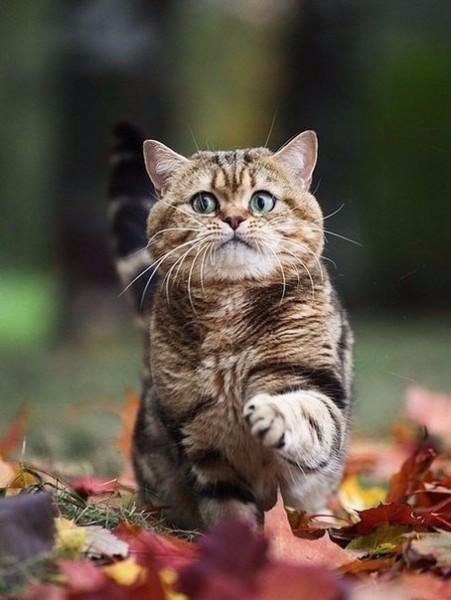Картинки котенок осенью