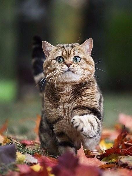 http://foto-cat.ru/wp-content/uploads/2015/09/N0hgRrIhMA-454x604.jpg