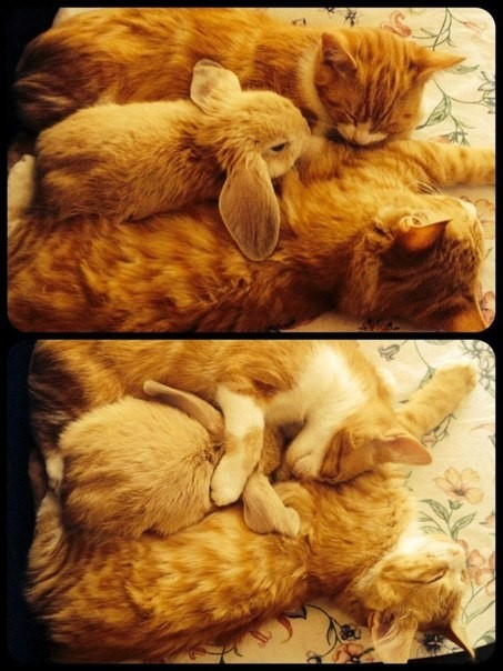 Кот с кроликом фото