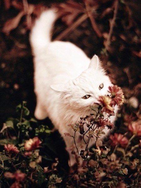 Картинки про осень и белая кошка