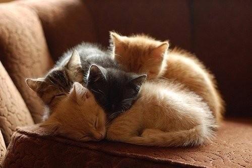 Красивые милые котята фото подборка