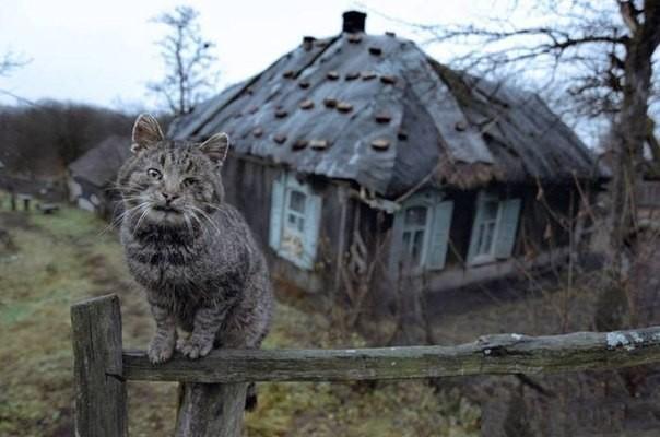Добрая история про кошку Мурку
