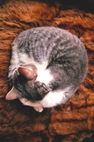Картинки на тему осень и коты