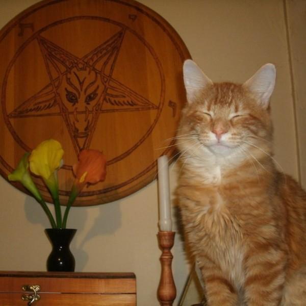 Смешные рыжие коты картинки