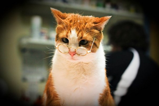 Рыжий кот в очках