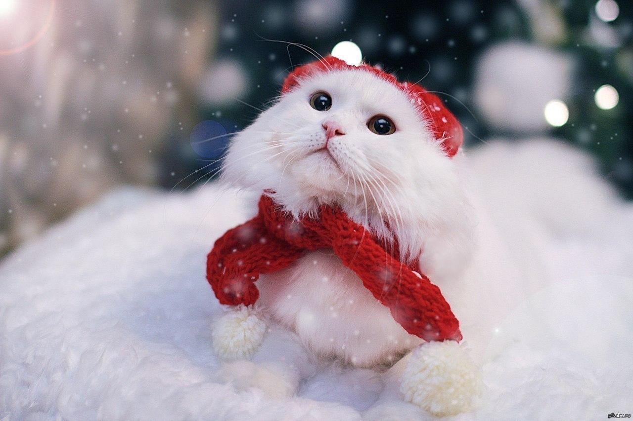 Кот в снегу фото. Подборка прикольные фото котов зимой