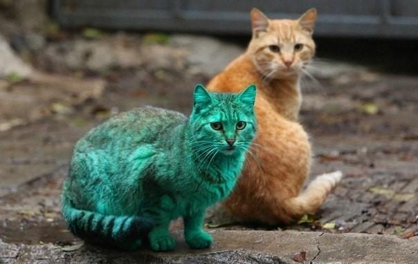 Кот зеленого цвета картинки и история