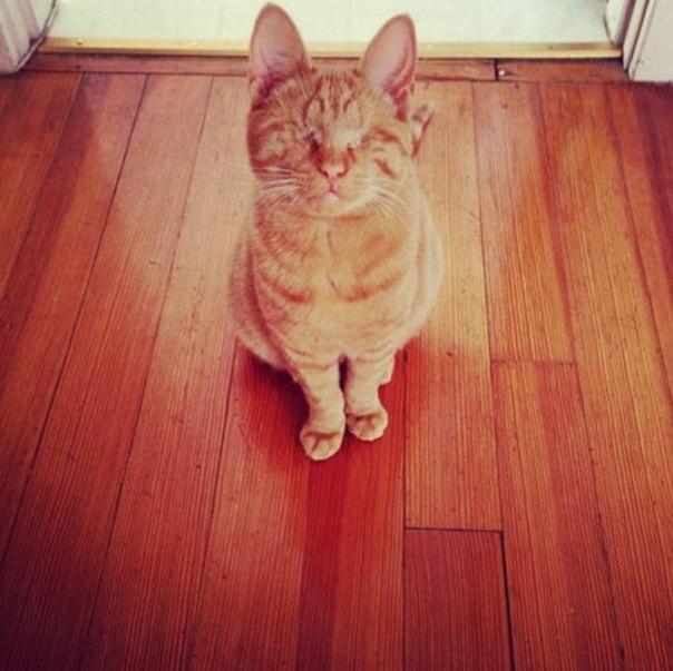 Слепой кот Диллон