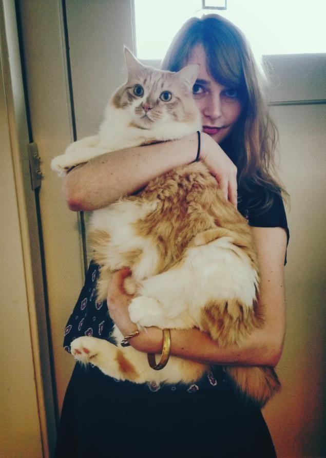 Гигантские коты фото