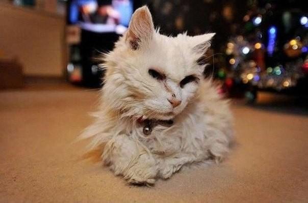 Самая старая кошка в мире