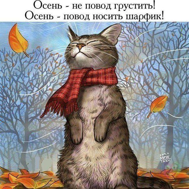 Кот в шарфике