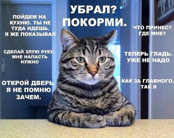 Приколы с котами картинки с надписями