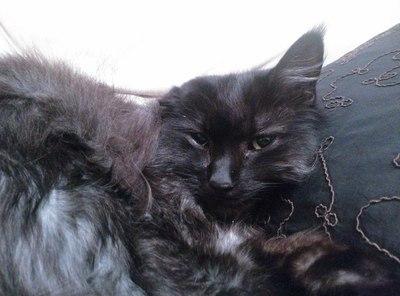 История спасения кота