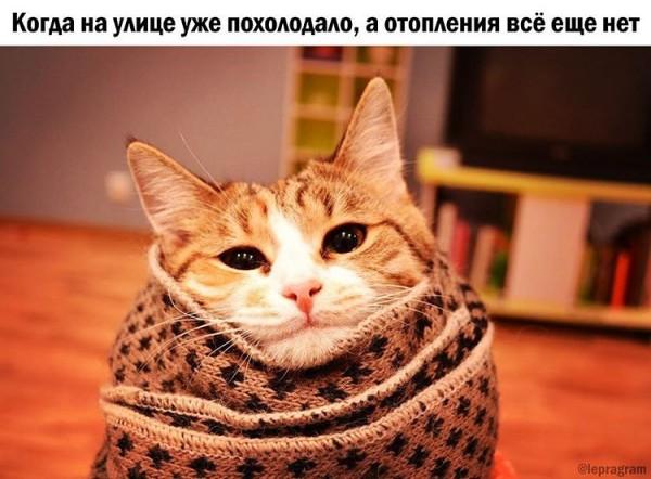 Кот в одеяле фото