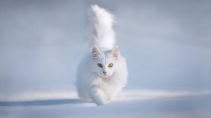 Кот зимой фото