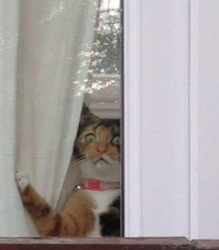 Кот смотрит в окно картинка