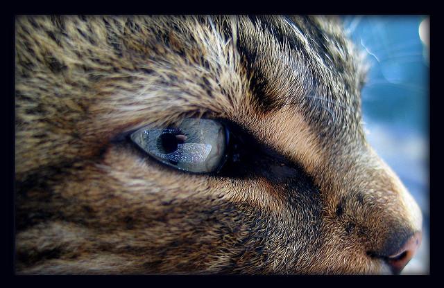 Взгляд серого кота