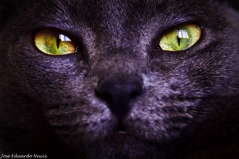 кот с зелеными глазами фото