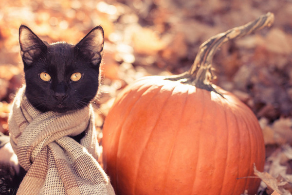 Черный кот и тыква