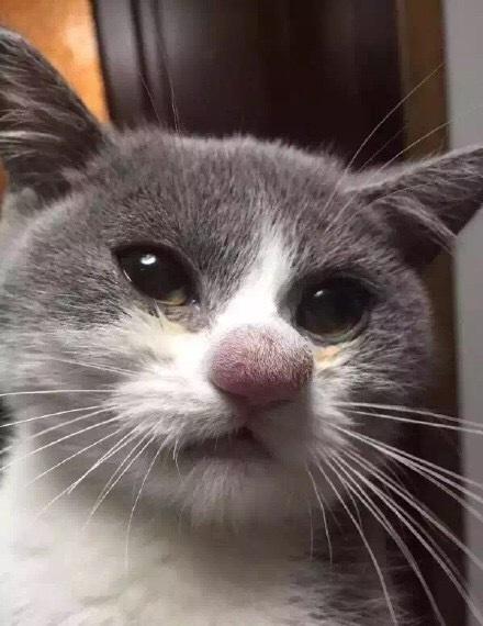 Кота укусила оса