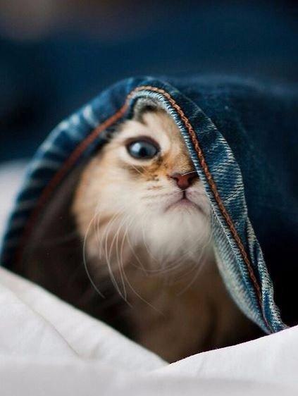 Красивые рыжие котики