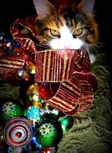 Фото котов новый год