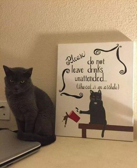 Кот скидывает напитки