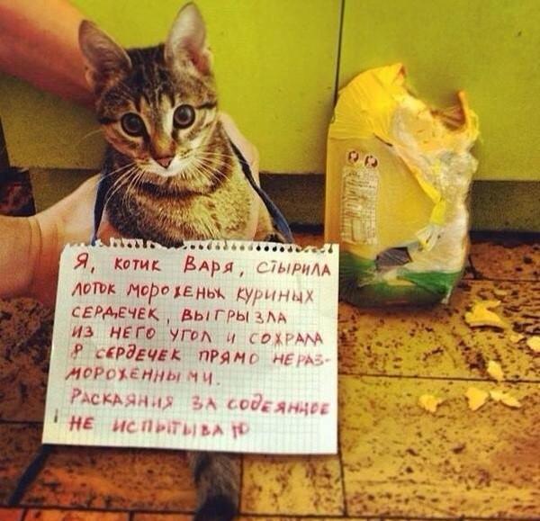 Котик просит понять и простить