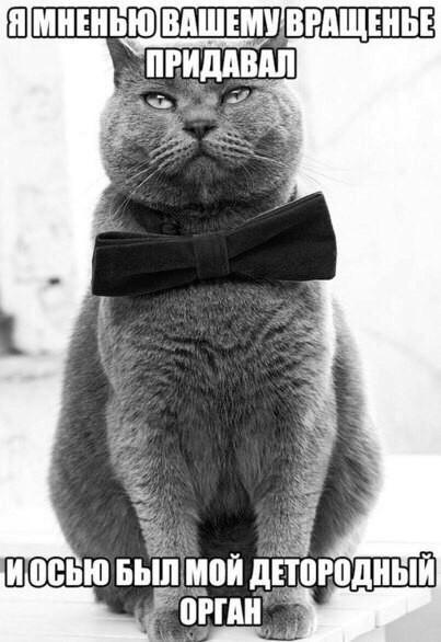Серый кот в бабочке