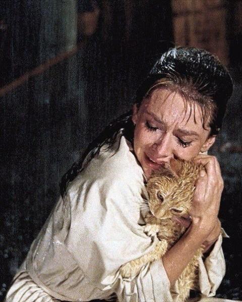 Одри Хепберн фото с котиком