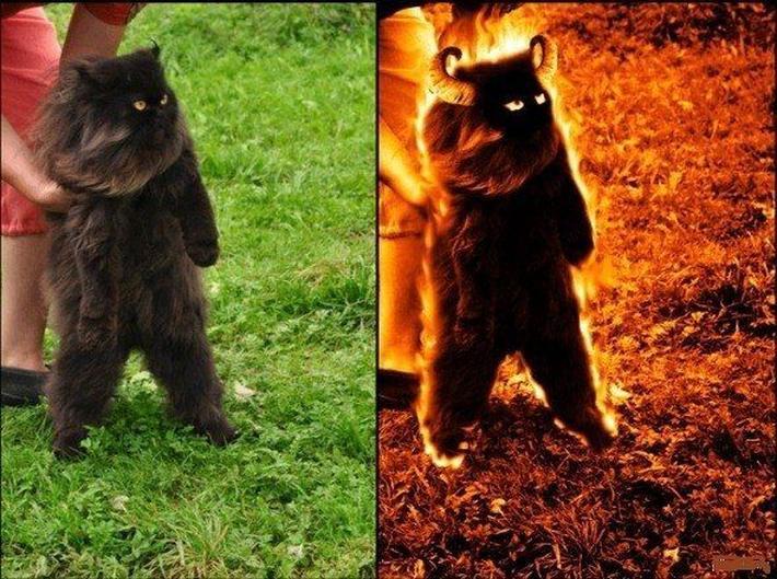 Кот-некромант бабы Зины