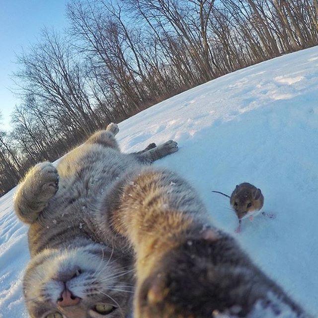 Селфи кота с едой