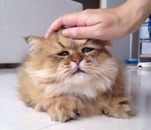 Котик очень грустный