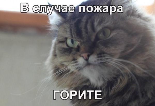 Самый злой кот фото