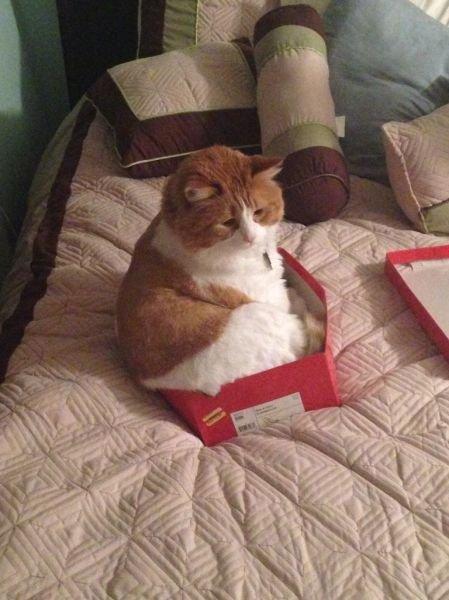 Кот в коробке фото