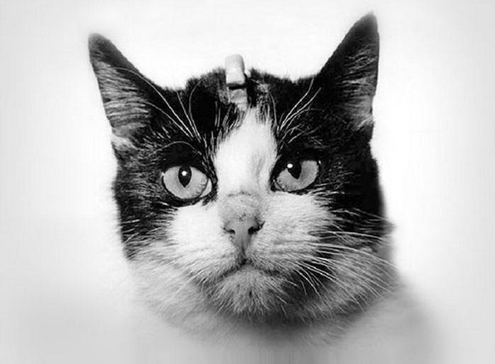 Почему коты не летают в космос