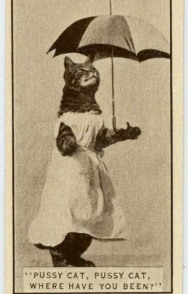 Кошка позирует фото 1932 г.
