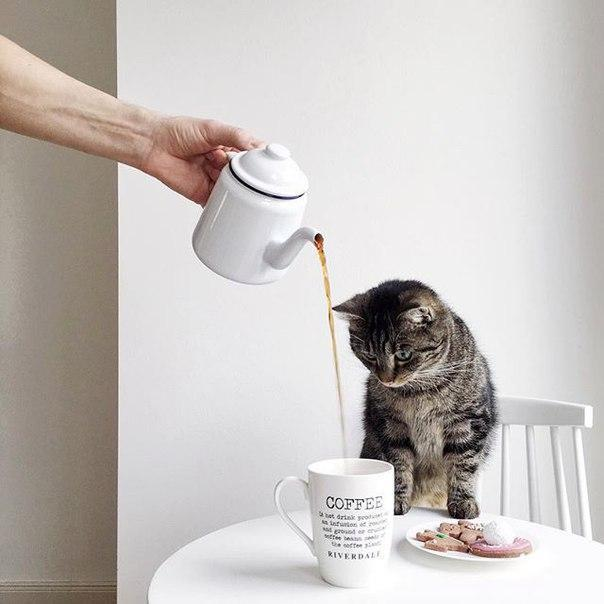 Котик желает доброго утра