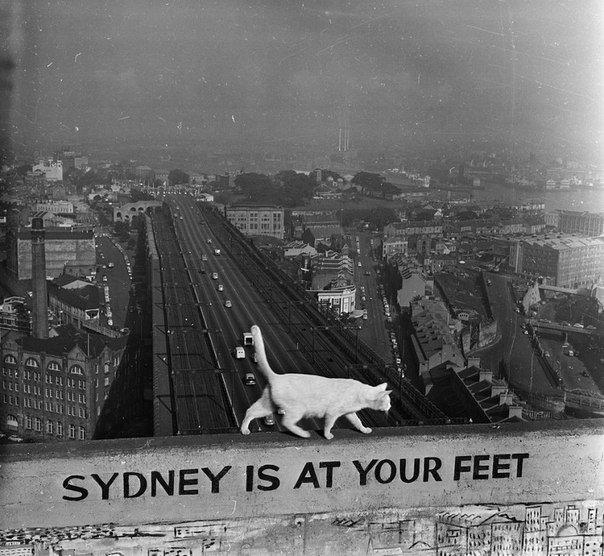 Кот с Сиднейского Харбор-Бридж