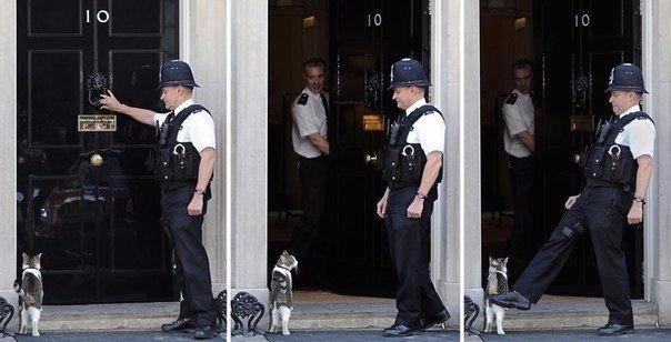 Кот премьер-министра Великобритании.