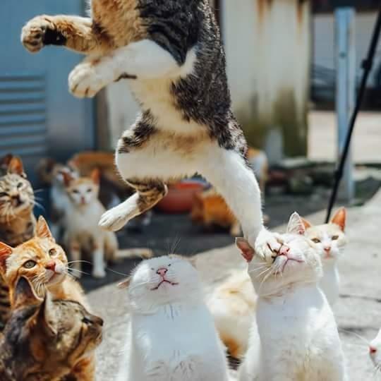 Карате-кот и смешная подборка с котиками