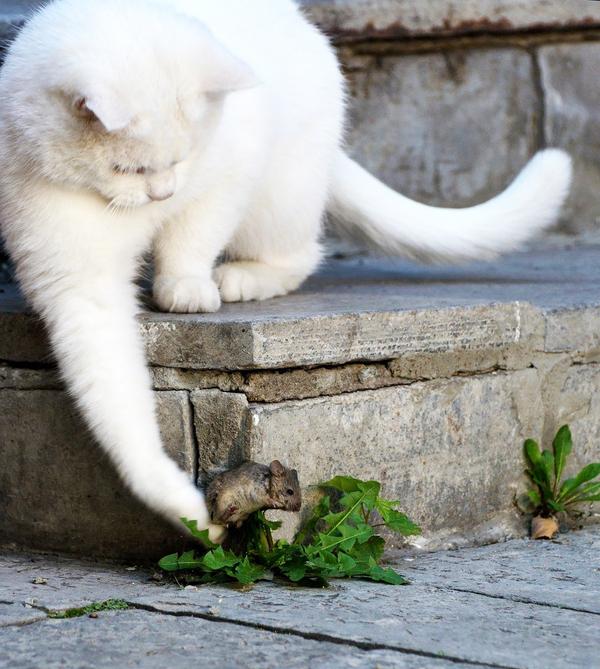 Кошки мыши фото